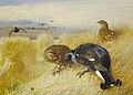 Archibald Thorburn On the stooks - Blackgame 1902.jpg