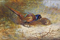 Archibald Thorburn Pheasants 1918.jpg