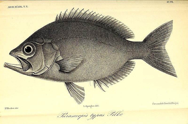 File:Archives néerlandaises des sciences exactes et naturelles (1875) (20138681770).jpg
