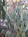 Arizona Cactus Garden 034.JPG