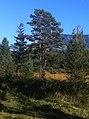 Around Lucerne (6329348102).jpg