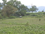 Grassland with a rhinoceros.