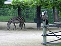Assiniboine Park Zoo, Winnipeg (430068) (9442463537).jpg