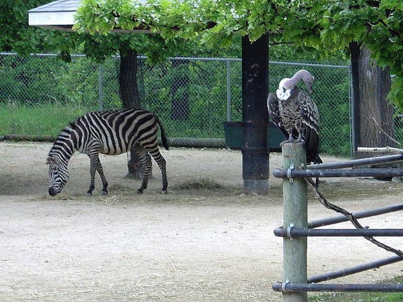 File:Assiniboine Park Zoo, Winnipeg (430068) (9442463537).jpg