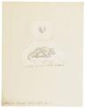Atalapha lasiura - 1700-1880 - Print - Iconographia Zoologica - Special Collections University of Amsterdam - UBA01 IZ20800081.tif