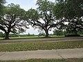 Audubon Park New Orleans 7 April 2020 - 09.jpg