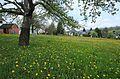 Auf der Krokuswiese in Drebach im Mai 2017..2H1A3065WI.jpg