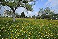 Auf der Krokuswiese in Drebach im Mai 2017..2H1A3082WI.jpg