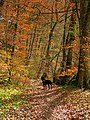 Autumn Colours In Spring Time - panoramio.jpg