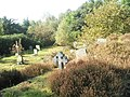 Autumn in the churchyard at St Mary Magdalene - geograph.org.uk - 1534856.jpg
