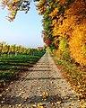 Autumn orchard path (Unsplash).jpg