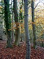 Autumn woodland - geograph.org.uk - 1585910.jpg