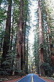 Avenue of the Giants - Humboldt Redwoods State Park - DSC02416.JPG