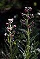 Badlands Flowers- Red, Pink, Blue (c7a7a642-6094-4b13-ae33-3a8bf20088fb).jpg