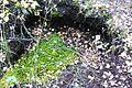 Bagno Chlebowo, torf (2).JPG