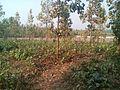 Bangabandhu Sheikh Mujib Safari Park (37).jpg