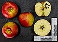 Barbarossa (apple) jm120643.jpg
