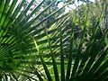 Barcelona Parc Ciutadella 15 (8252494342).jpg