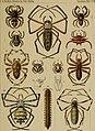 Baron Carl Claus von der Deckens reisen in Ost-Afrika in den jahren 1859 bis 1865 (1869) (19731095594).jpg