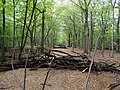 Barrier in the Hambach forest 07.jpg