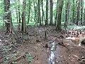 Battle Creek Cypress Swamp 28.jpg
