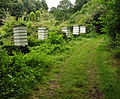 Beehives at St Anthony in Roseland.jpg