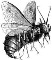Beelzebub as depicted in Collin de Plancy's Dictionnaire Infernal (Paris, 1825).
