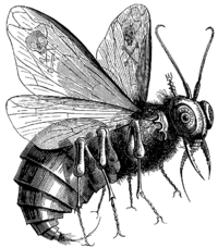 Beelzebub as depicted in Collin de Plancy's Dictionnaire Infernal; note the four wings and mandibles, which would technically make this a bee or wasp
