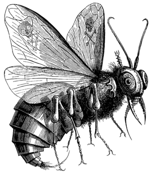 Mark 3 - Beelzebub as depicted in Collin de Plancy's Dictionnaire Infernal (Paris, 1863).