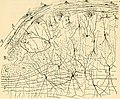 Beitrag zum Studium der Medulla Oblongata, des Kleinhirns und des Ursprungs der Gehirnnerven (1896) (14578714200).jpg