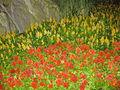 Bellagio garden IMG 3756.jpg