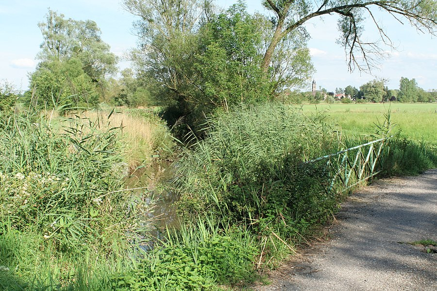 English:  Riparian zone of Belvitte, just upstream of its confluence in the Mortagne river.