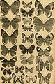 Berliner entomologische Zeitschrift (1907) (20180284339).jpg
