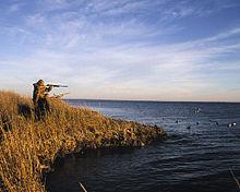 Waterfowl Hunting Wikipedia