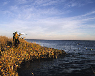 Waterfowl hunting - Duck hunters in a hunting blind. Decoys are visible in the water to the right.
