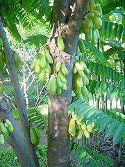 Le Bilimbi dans Fruits & Légumes du Pays 180px-Bilimbi