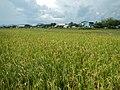 Binangonan,Rizaljf4902 02.JPG