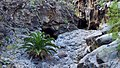 Biosphere Reserve La Gomera 25.jpg