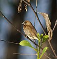 Bird (14493909262).jpg