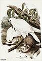 Bird illustration by Elizabeth Gould for Birds of Australia, digitally enhanced from rawpixel's own facsimile book15.jpg