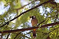 Bird on the branch of a tree.jpg