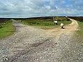 Bloworth Crossing, North York Moors - geograph.org.uk - 894981.jpg