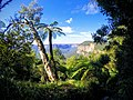 Blue Mountains National park.jpg