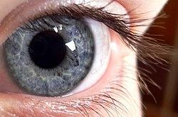 Röda ögonvitor vuxna