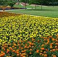 Blumenrabatten - panoramio.jpg