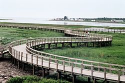 The boardwalk across the dune in the Irving Eco-Centre.