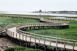Bouctouche - The boardwalk across the dune in the Irving Eco-Centre