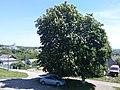 Boguslav, Ukraine (26419837810).jpg