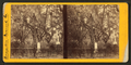 Bonaventure Cemetery, from Robert N. Dennis collection of stereoscopic views 4.png