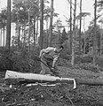 Bosbewerking, arbeiders, boomstammen, werkzaamheden, Bestanddeelnr 251-7853.jpg